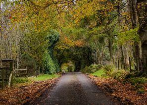 ايجار سيارات أوما, ايرلندا الشمالية