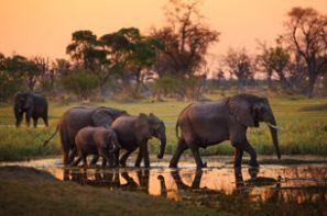 تأجير السيارات الرخيصة في بوتسوانا