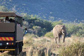 ايجار سيارات فريبورغ, جنوب إفريقيا