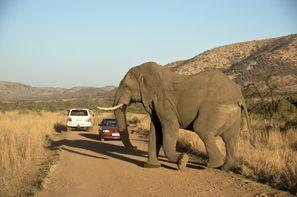 ايجار سيارات ليركسدروب, جنوب إفريقيا