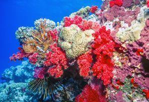 ايجار سيارات ساحل المرجان, فيجي